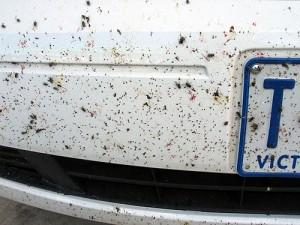 Clean Bugs off a Car